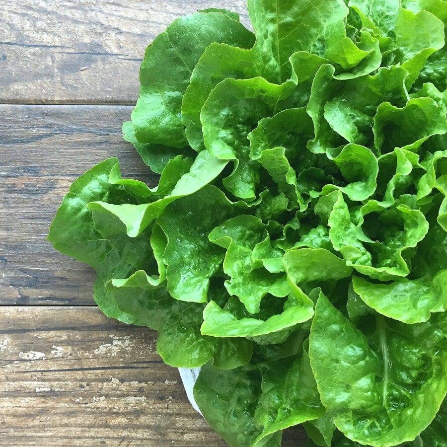 garden-lettuce-gardeninthekitchen