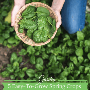 5 Easy-To-Grow Cool Weather Crops