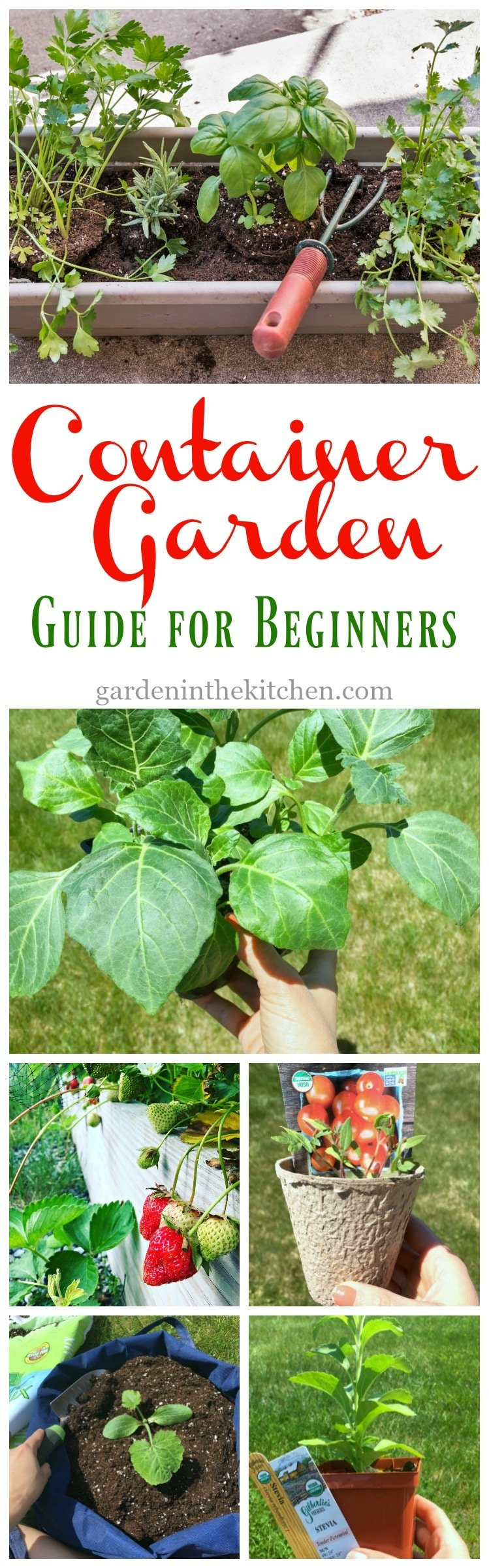 Container Garden Guide for Beginners