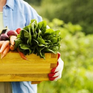 Vegetable Garden Guide For Beginners