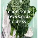 Grow Your Own Salad Greens!